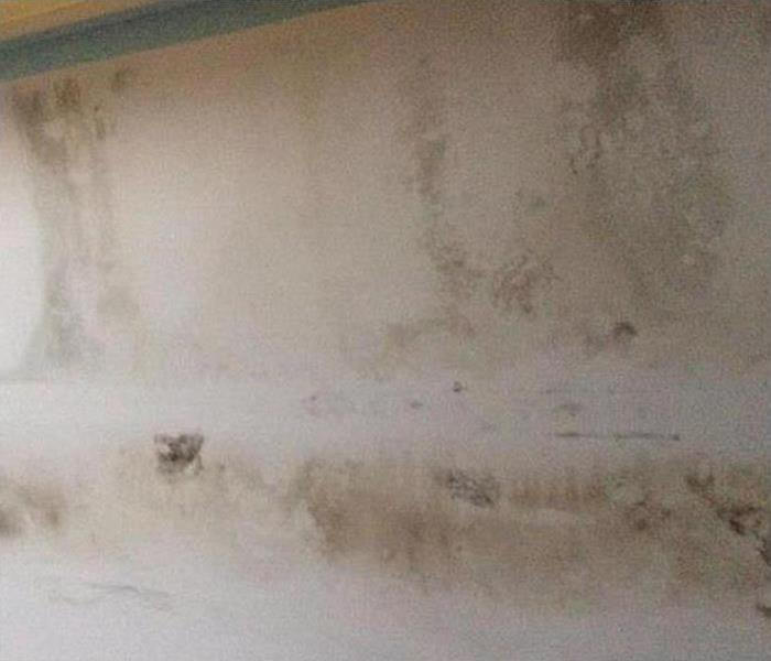 Mold Damage In Ormond Beach Before