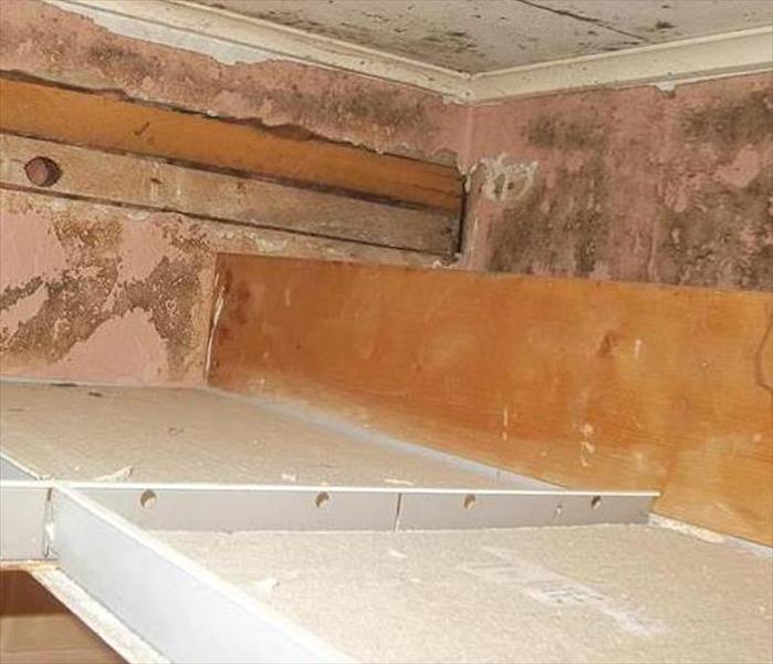 Hidden Mold in Ormond Beach Drop-Ceiling