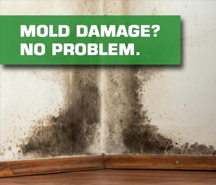 Mold Remediation  Does Your Volusia County Home Have A Mold Problem?