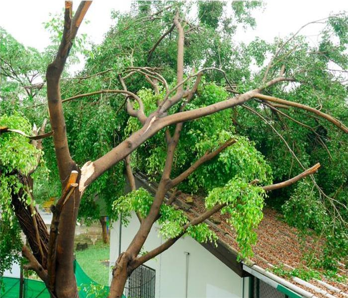 Tree fallen on roof after severe storm.