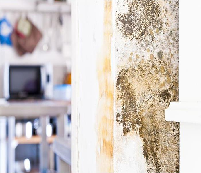 Mold Remediation Get Rid Of Your Mold Damage Problems In Your Ormond Beach Home Once And For All