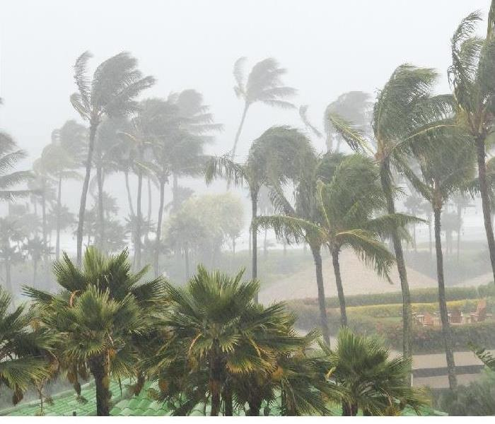 Storm in Florida; waving palm rrees; heavy rain