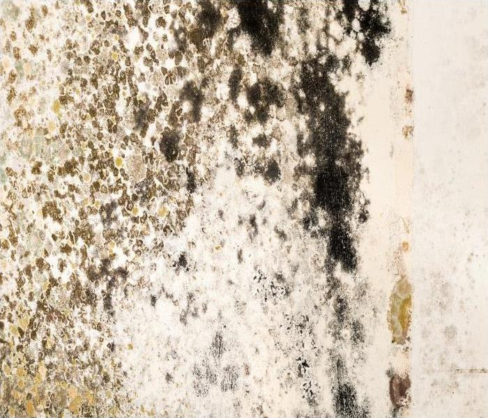 Mold Remediation Contact Our Team Of Professionals If You Find Mold Growing In Your Ormond Beach Home