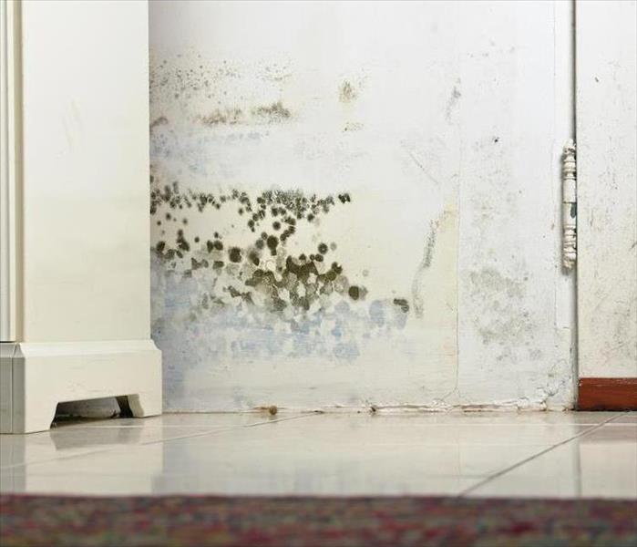 Mold Remediation Persistent Moisture Can Lead to Mold Growth in Your Ormond Beach Residence