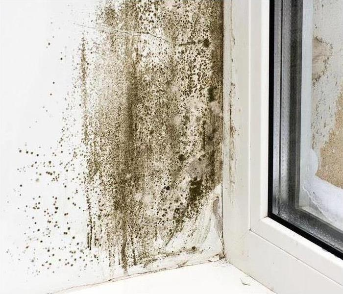 Mold Remediation Mold Doesn't Have To Be Scary