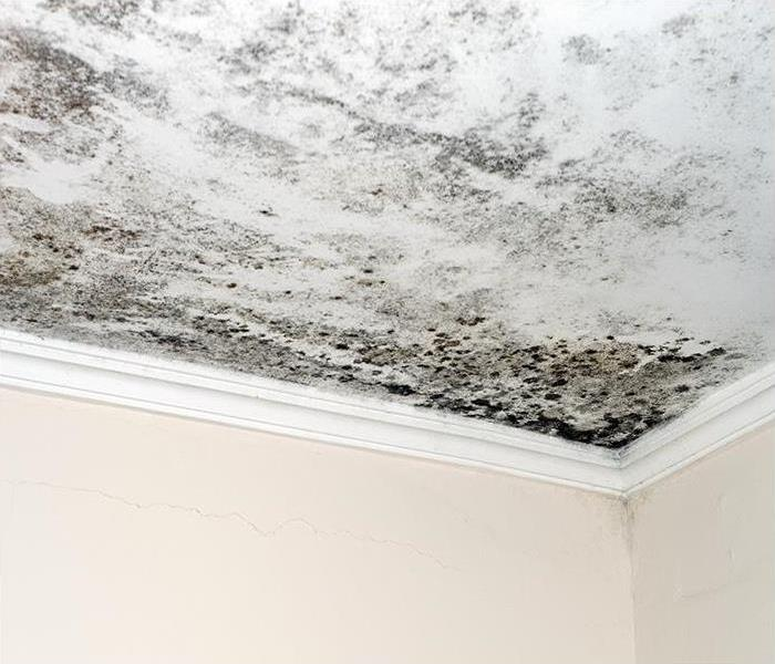 Mold Remediation The Advantages Of Hiring Our Crew To Clean And Remove Mold From Your Ormond Beach Property